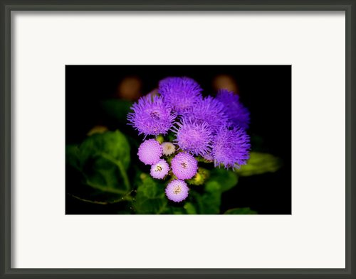 Shades Of Purple Framed Print By Karen M Scovill