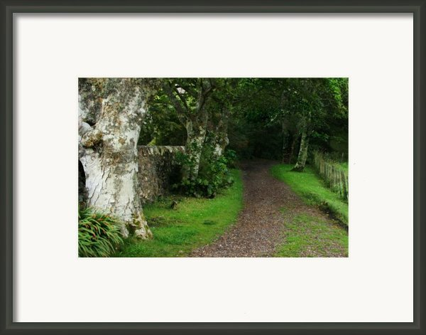 Shady Lane Framed Print By Traveler Scout