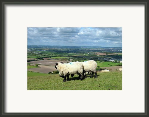 Sheep At Westbury Tor Framed Print By Kurt Van Wagner