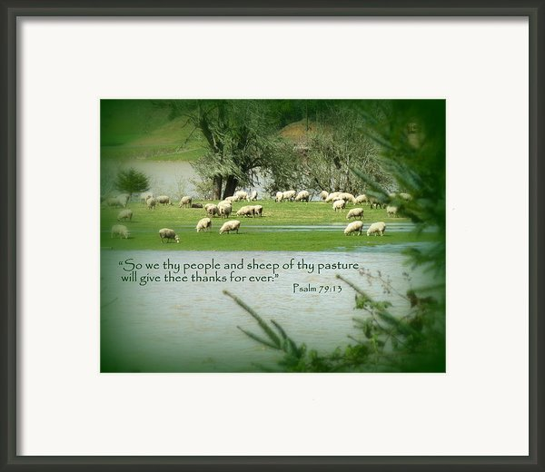 Sheep Grazing Scripture Framed Print By Cindy Wright