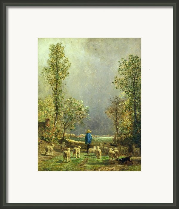 Sheep Watching A Storm Framed Print By Constant-emile Troyon