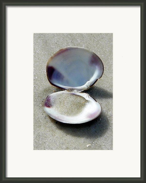 Shell And Sand Framed Print By Sheri Mcleroy