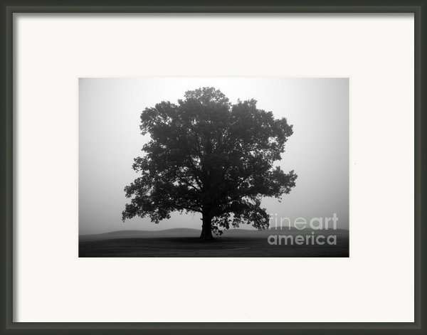 Shelter Framed Print By Amanda Barcon