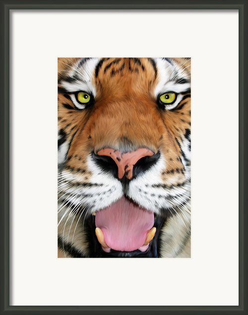 Sherekhan Framed Print By Big Cat Rescue