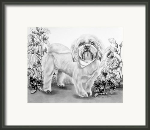 Shih Tzu In Black And White Framed Print By Lena Auxier