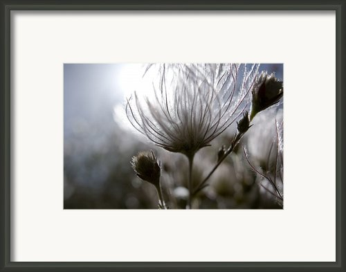 Shimmering Flower I Framed Print By Ray Laskowitz - Printscapes