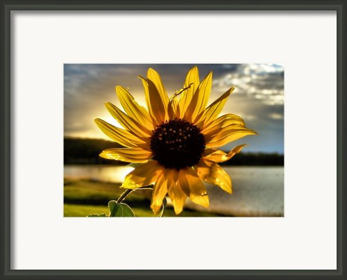 Shine Down Framed Print By Karen M Scovill