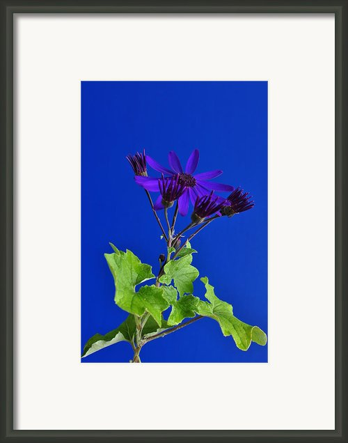 Shooting Stars Framed Print By Pepper Link