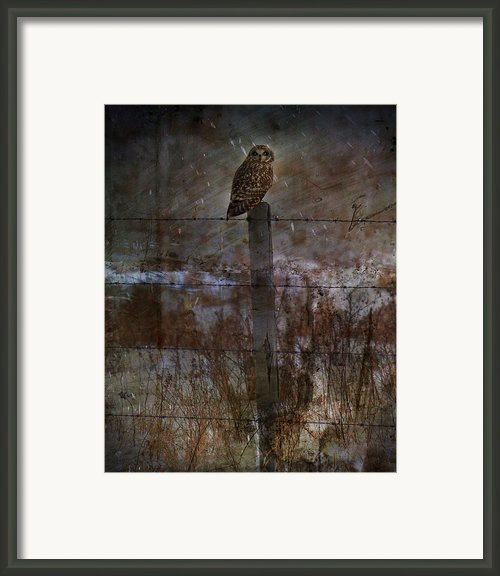 Short Eared Owl Framed Print By Jerry Cordeiro