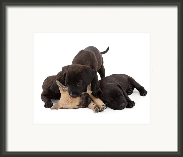Sibling Rivalry Framed Print By Susan  Schmitz