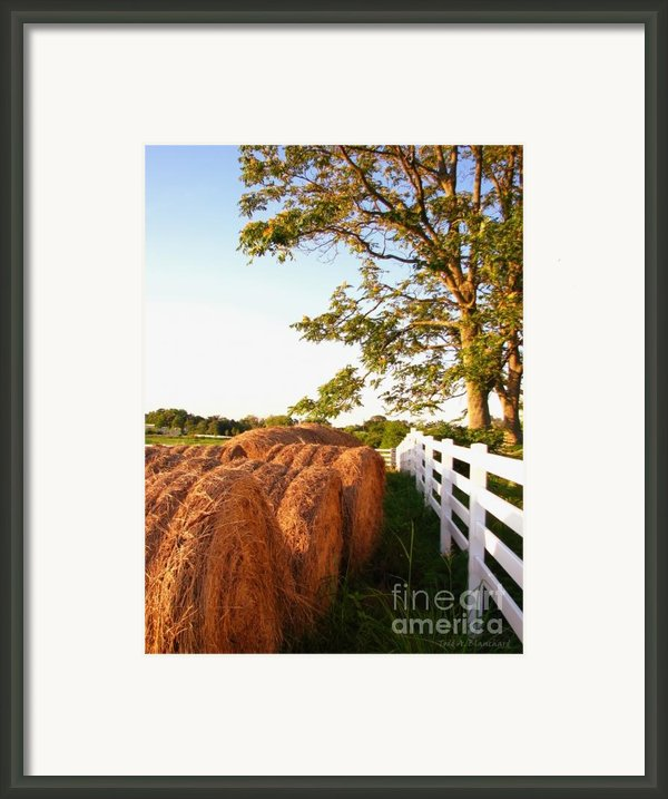 Side-by-side Framed Print By Todd A Blanchard