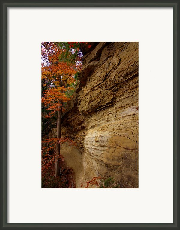 Side Winder Framed Print By Ed Smith