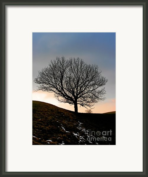 Silhouette Of A Tree On A Winter Day Framed Print By Christine Till
