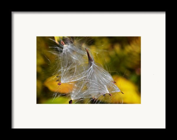 Silky Autumn Framed Print By Susan Leggett