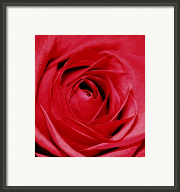 Silky Petals Framed Print By Cathie Tyler