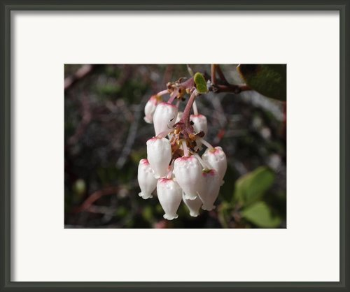 Silver Bells Framed Print By