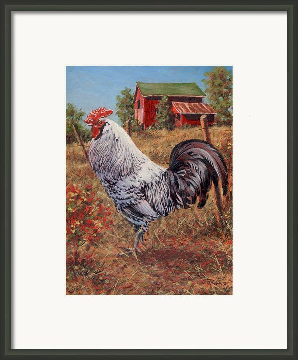Silver Laced Rock Rooster Framed Print By Richard De Wolfe