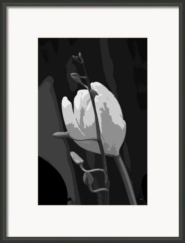 Simplicity Framed Print By Gerlinde Keating - Keating Associates Inc