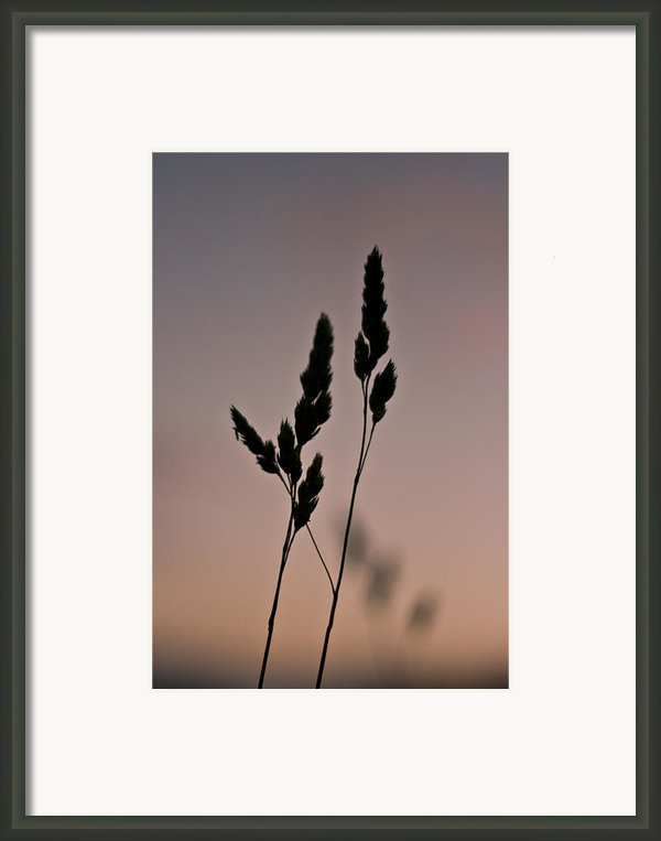 Simplistic Beauty Framed Print By Georgia Fowler