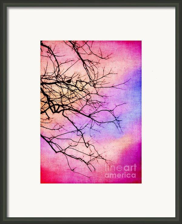 Singing In The Sunshine Framed Print By Judi Bagwell