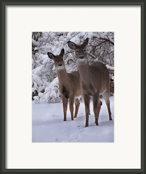 Sisters Framed Print By Scott Hovind