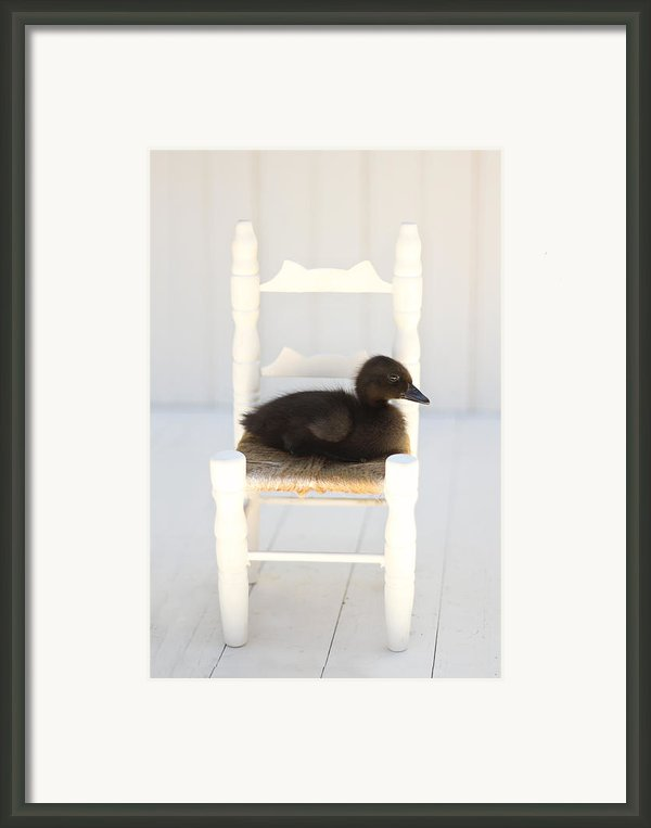 Sitting Duck Framed Print By Amy Tyler