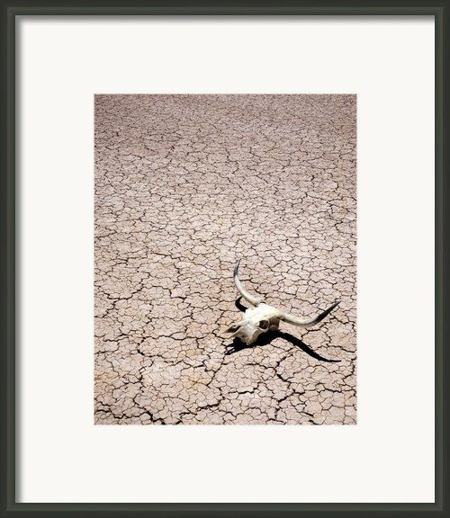 Skull In Desert Framed Print By Kelley King