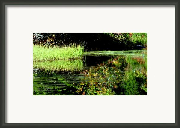 Slow Morning Framed Print By Louie Rochon