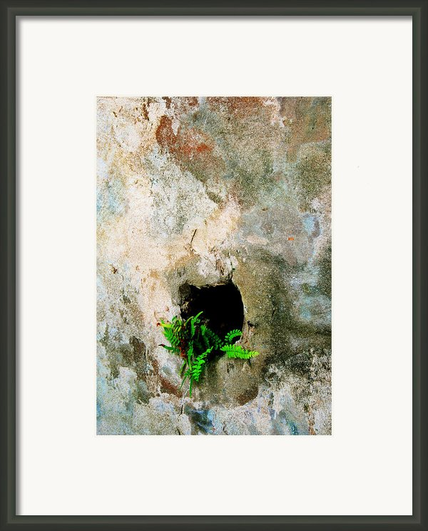 Small Ferns Framed Print By Perry Webster