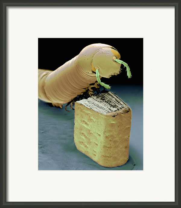 Smallest Book And Millipede, Sem Framed Print By Volker Steger