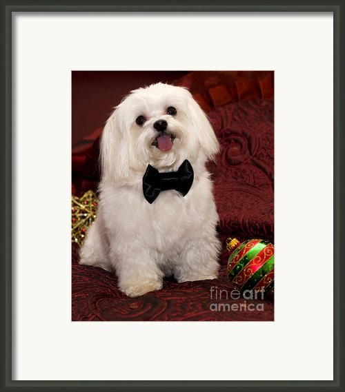 Smile Framed Print By Leslie Leda