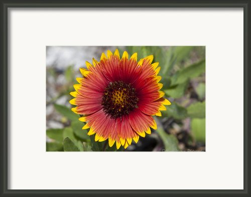 Smiles Framed Print By Charles Warren