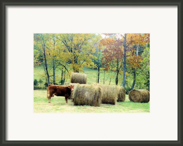 Smorgasbord Framed Print By Jan Amiss Photography