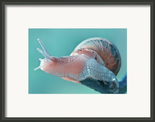Snail Framed Print By Arnaud Bertrande