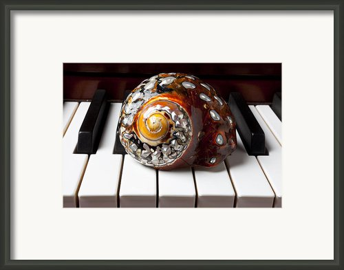 Snail Shell On Keys Framed Print By Garry Gay