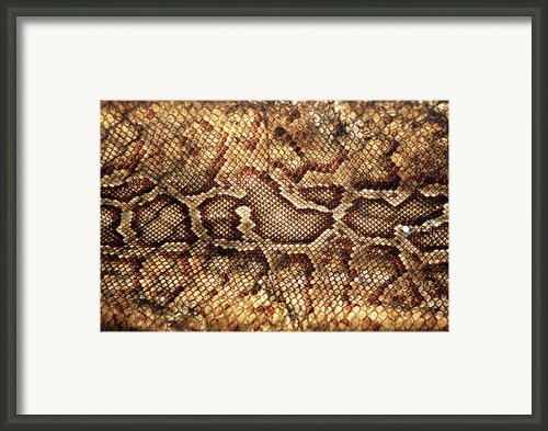 Snake Skin Framed Print By Abner Merchan