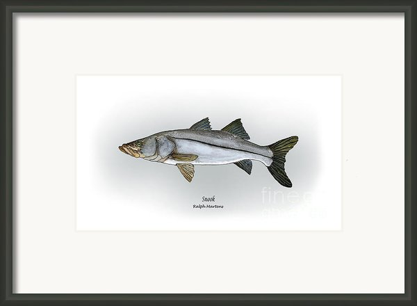 Snook Framed Print By Ralph Martens