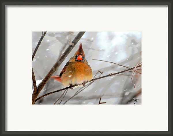 Snow Surprise Framed Print By Lois Bryan