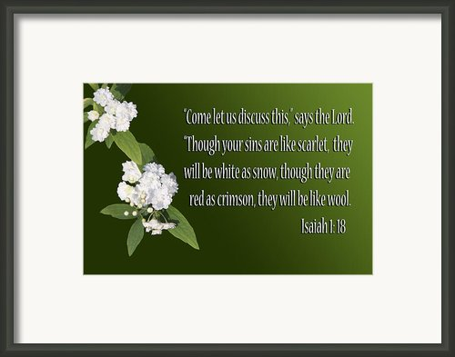 Snow White Flowers Is. 1v18 Framed Print By Linda Phelps