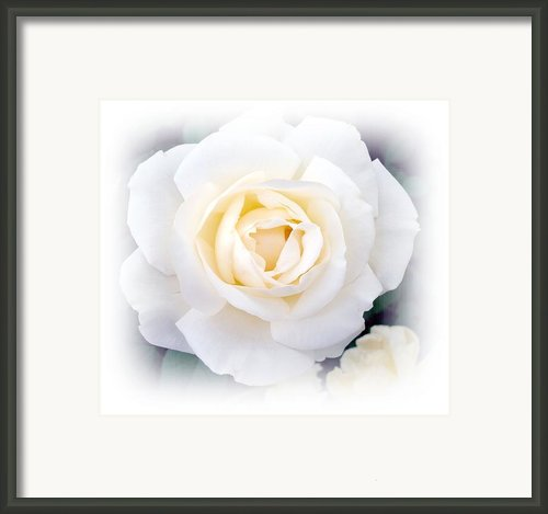 Snow White Framed Print By Kathy Bucari