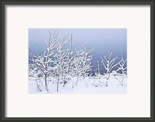 Snowy Trees Framed Print By Elena Elisseeva
