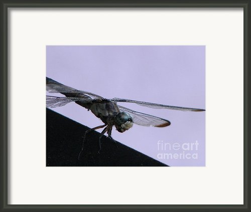 So Many Bugs So Little Time Framed Print By Priscilla Richardson
