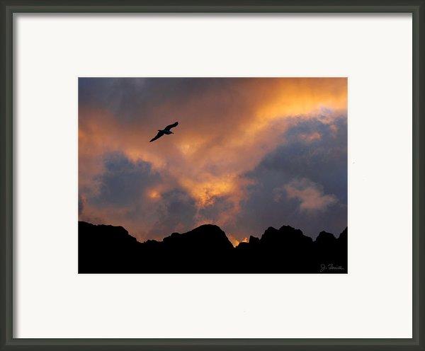Soaring In The Midnight Sun Framed Print By Joe Bonita