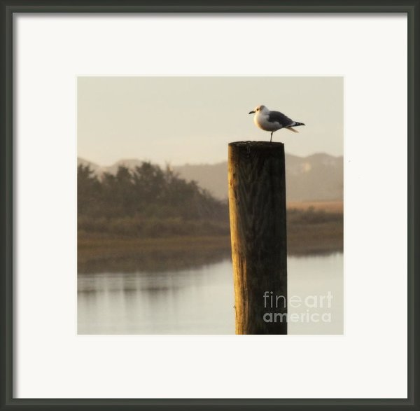 Soft Mornings Framed Print By Karen Wiles
