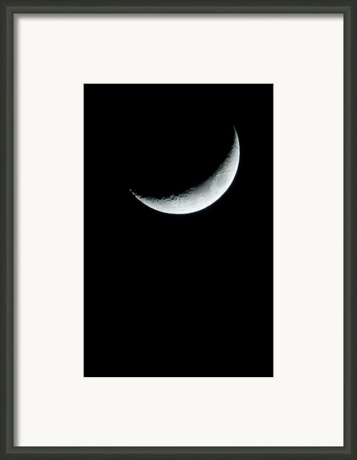Solo Framed Print By Heide Rainey