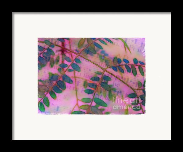Song Of The Honey Locust Framed Print By Judi Bagwell