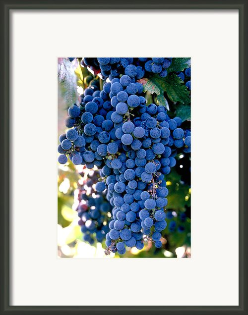Sonoma Grapes Framed Print By Bart Edson