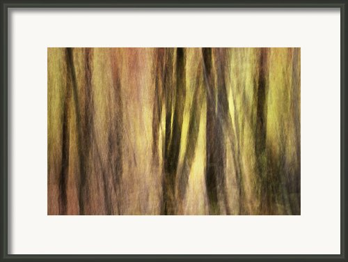 Sourwoods In Autumn Abstract Framed Print By Rob Travis