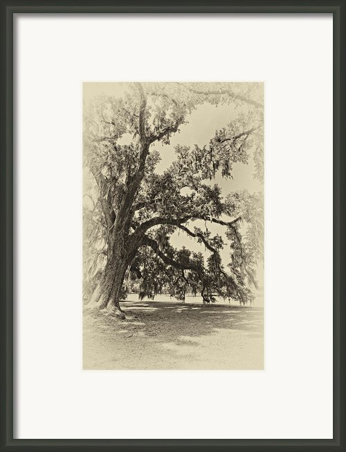 Southern Comfort Sepia Framed Print By Steve Harrington