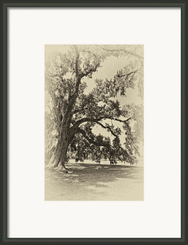 Southern Comfort Sepia Framed Print By Steve Harrington